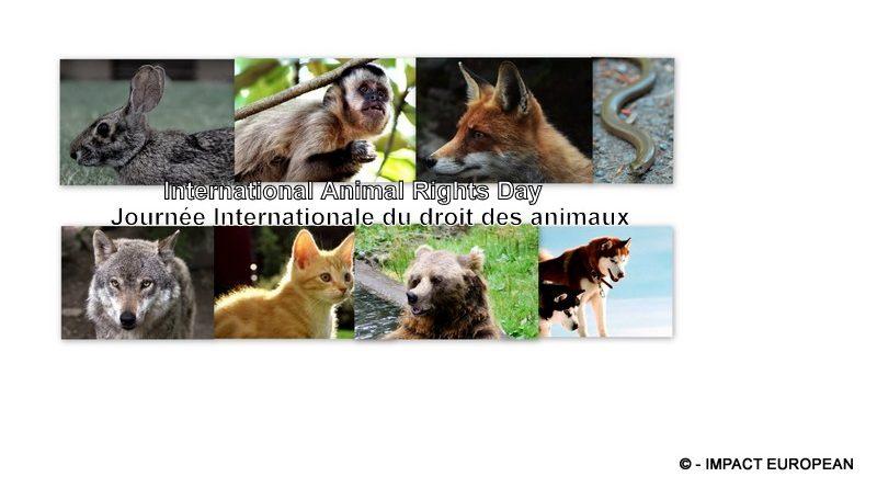 Journée Internationale du droit des animaux