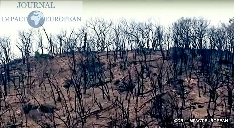 La faune et la flore de l'Australie dévastées par les incendies