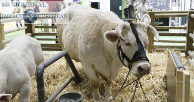 Emmanuel Macron présent 12h30 pour inaugurer le 57ème Salon de l'agriculture