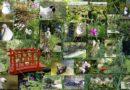 Parc floral de la Court d'Aron: un univers floral et tropical