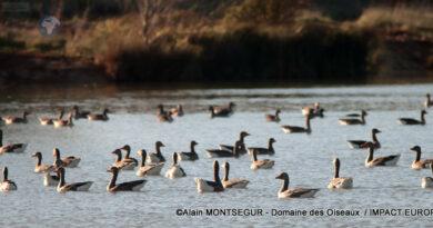 S'évader à tire d'aile dans l'Ariège