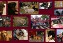 La loi sur le bien-être animal rejetée à l'Assemblée Nationale